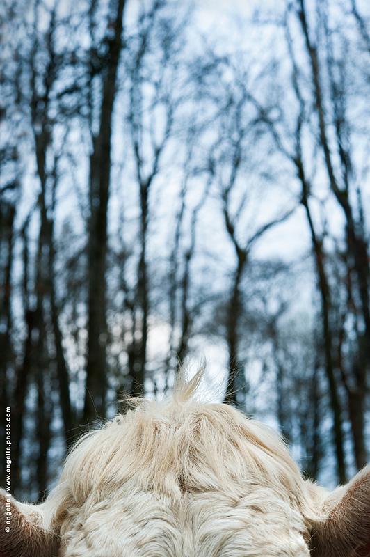 photo @ angelle