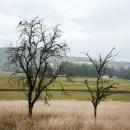 DSC8046-2-arbres-eveques