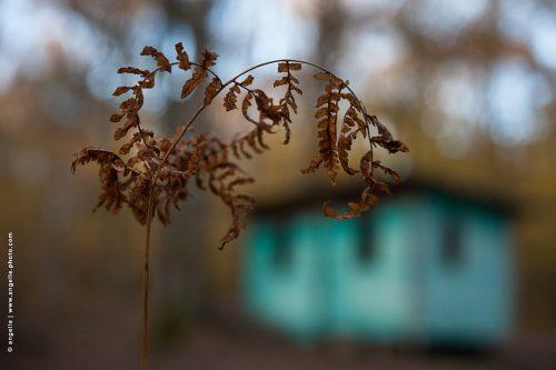 photo © angelle cabane chasse clan fougère foret refuge abri automne campagne étrange harmonie