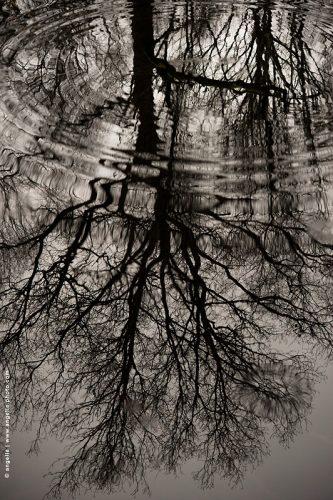 photo © angelle reflet arbre foret jour gris ondulation cercle déformation poésie hivers