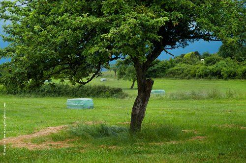 photo © angelle arbre fruitier pré récolte foin soir d'orage lumiere trio de paquetcercle de foin