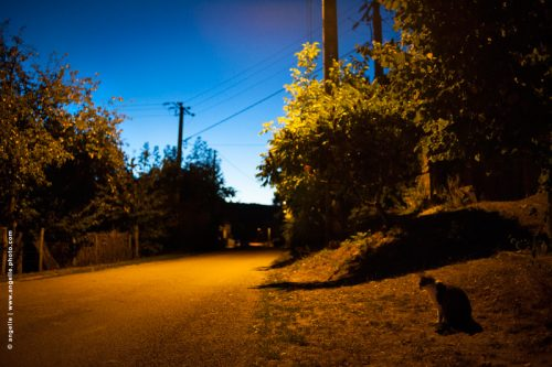 photo © angelle chat crepuscule village route isolé lumiere solitude animal