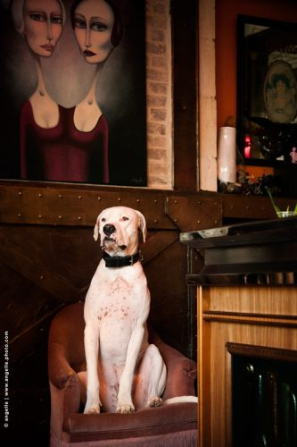 photo © angelle chien dog blanc prince ambiance cafe allure regard