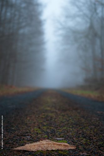 photo © angelle route foret feuille brouillard hivers chemin ligne droite simple