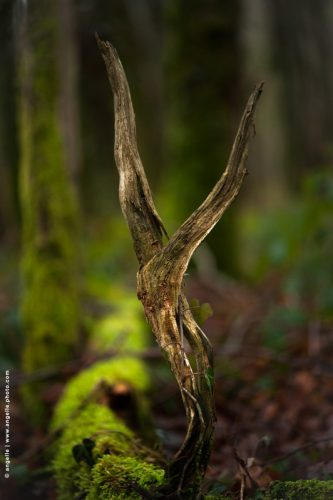 photo @ angelle bois forme danse nature mouvement lie vert foret harmonie symbole