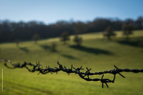 photo © angelle fil barbele pré arbres fruitiers liberté espace fermer clore contraste llimite