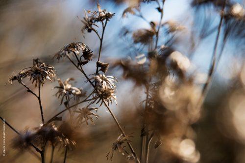 photo © angelle fleurs séchées extérieur ciel fin de l'hivers mélancolie mouvement lumiere