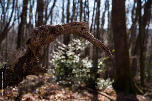 photo ©angelle oiseau de bois souche foret imagination martin pêcheur silhouette reve
