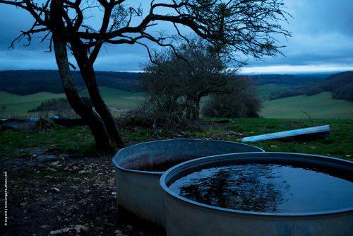 photo © angelle abreuvoir arbre crépuscule campagne reflet élevage