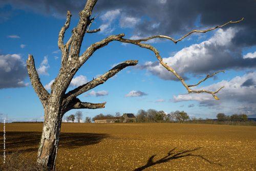 photo @ angelle arbre mort mouvement ciel nuages campagne nature champs ferme culture paysage terre