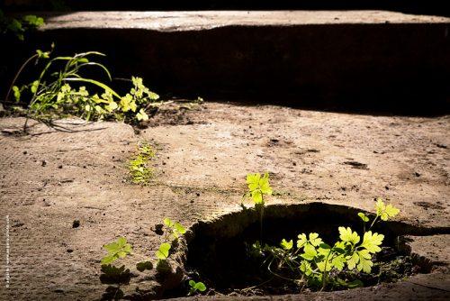 photo © angelle sol lavoir ombre lumiere feuillage repousse recommencement vert verdure désolé