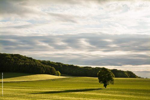 photo @angelle paysage les taules ble champs soirée fin du jour vert nature espace