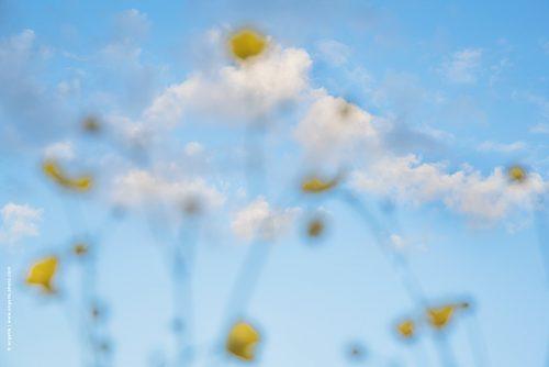 photo © angelle fleurs pâquerette été chaleur vision flou mirage nature campagne nuage léger