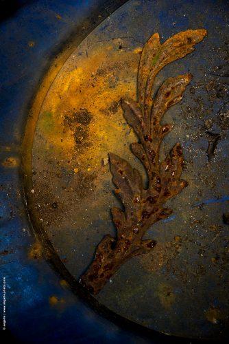 photo © angelle plat décoration grenier feuillage ciel terre sublimer beauté mouvement
