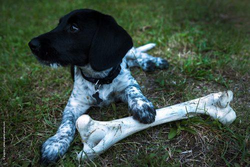 photo © angelle chien chiot os jeux d'échelle animal etonement situation drôle
