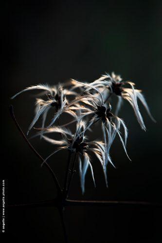 photo © angelle fleurs graines élégance nature douceur