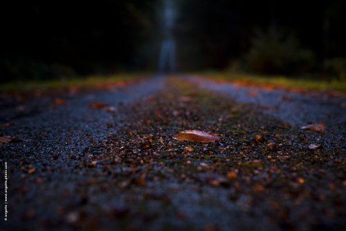 photo © angelle feuille route forester crepuscule detail point de vue du sol