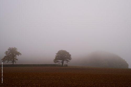 photo © angelle arbres brouillard terre culture bourgogne masse sombre étrange