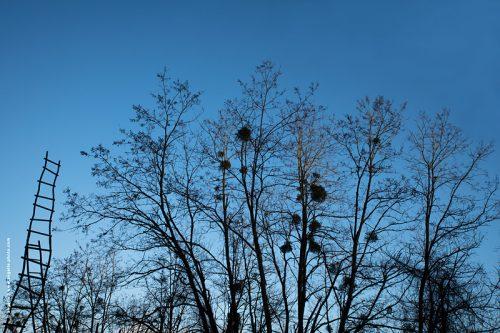photo @ angelle échelle ciel bleu arbres hivers installation passage