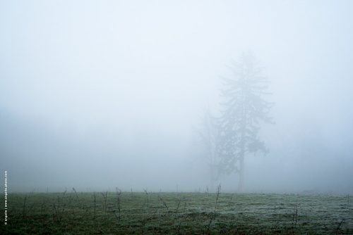 photo © angelle paysage brouillard léger silhouette arbre sapin champ arbres hiver