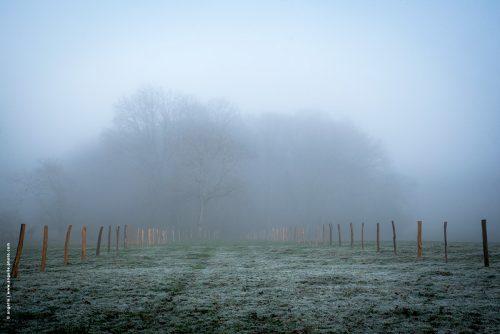 photo © angelle paysage brouillard léger champ poteaux clôtures silhouette arbres hiver