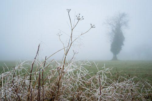 photo © angelle herbes gelee brouillard pre nature arbre brume hivers