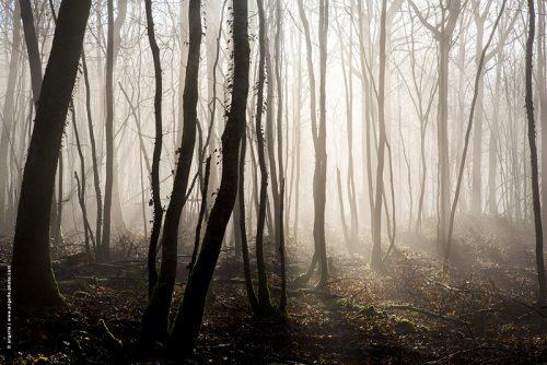 photo © angelle paysage brouillard soleil contre-jour silhouette foret arbres hiver