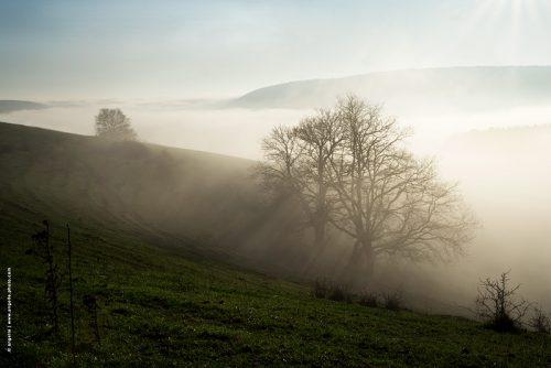 photo © angelle paysage brume brouillard nature campagne arbres monts vallée lumiere douceur