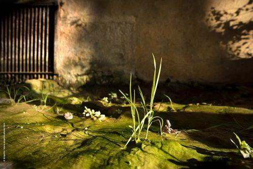 photo © angelle herbe lavoir peinture lumiere ras du sol élégance mousse vert soleil