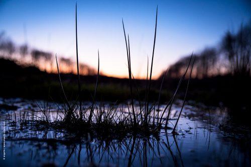 photo © angelle eau flaque crépuscule reflet touffe d'herbe nature calme lignes hivers nièvre bourgogne