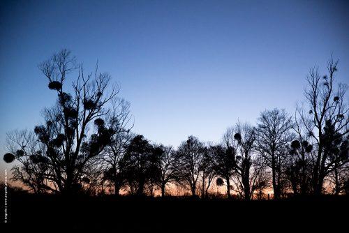 photo © angelle arbres haie crépuscule silhouette pré dessin