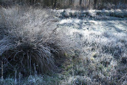 photo © angelle boule herbe hivers gelee pre blanc lisière foret