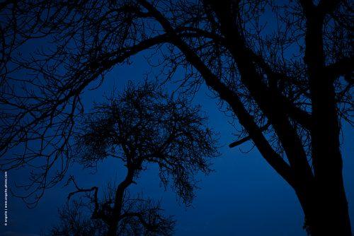 photo © angelle arbres nuit silhouette branche mystère envelopper