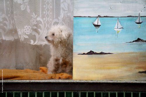 photo© angelle chien vitrine tableau peinture bateau bichon scène de village magasin