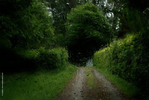 photo © angelle voiture vue du pare brise chemin arbre parc après l'orage campagne