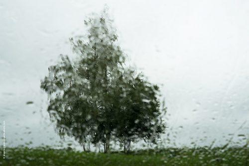 photo © angelle arbres talus nature campagne saule pleureur pluie vue du pare brise