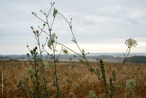 photo © angelle fleurs graminées pluie goutes paysage campagne étendu poésie chapelet légèreté