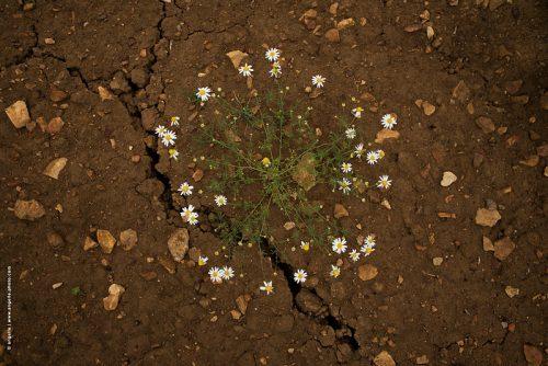photo © angelle terre culture insolite fleurs ronde crevasse légèreté  poésie