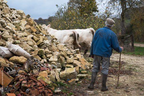 photo © angelle vaches troupeau paysan regard élevage ferme soin