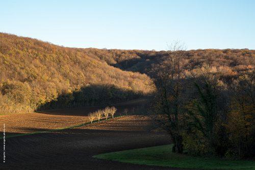 photo © angelle paysage fin d'automne 4 arbres soleil dénudé culture ligne campagne lumiere