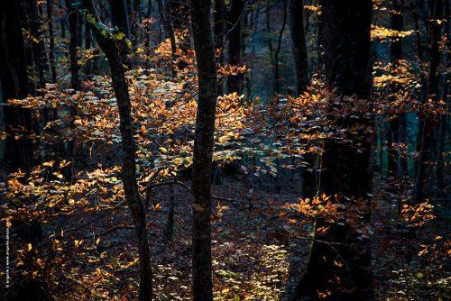 photo © angelle automne feuilles foret campagne lumiere couleur coloré