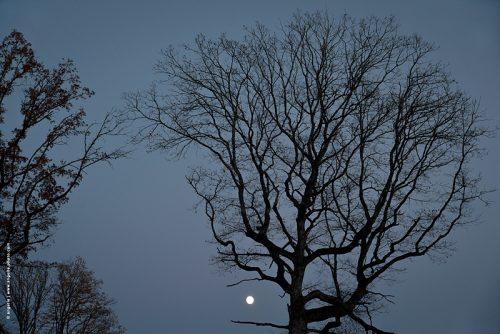photo © angelle arbres nuit silhouette lune pleine crépuscule lisière foret