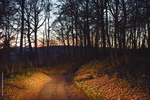 photo © angelle chemin foret lisière crépuscule magie lumiere arbres