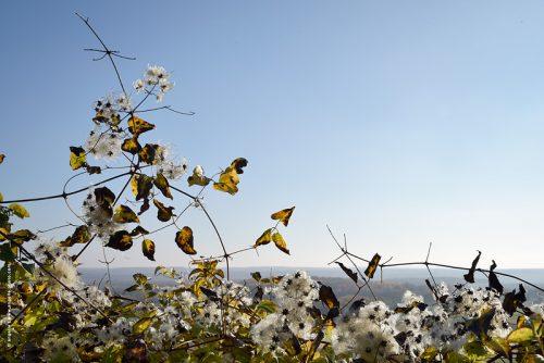 photo © angelle legererete nature plumeau paysage lumiere haie panorama feuillage