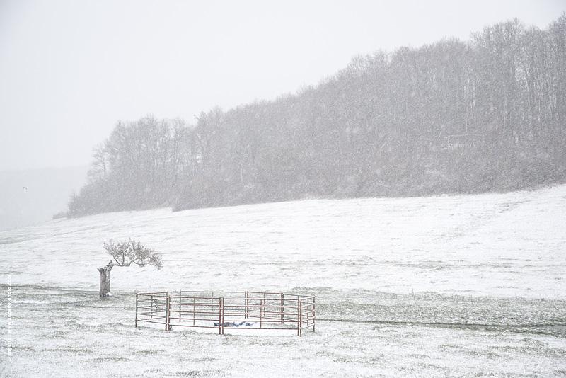 photo © angelle pre arbre abimé neige parc a vache solitude espace campagne