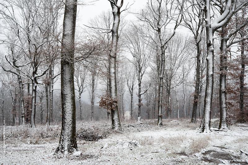 photo © angelle foret chene neige saupoudrer vent pictural danse douceur
