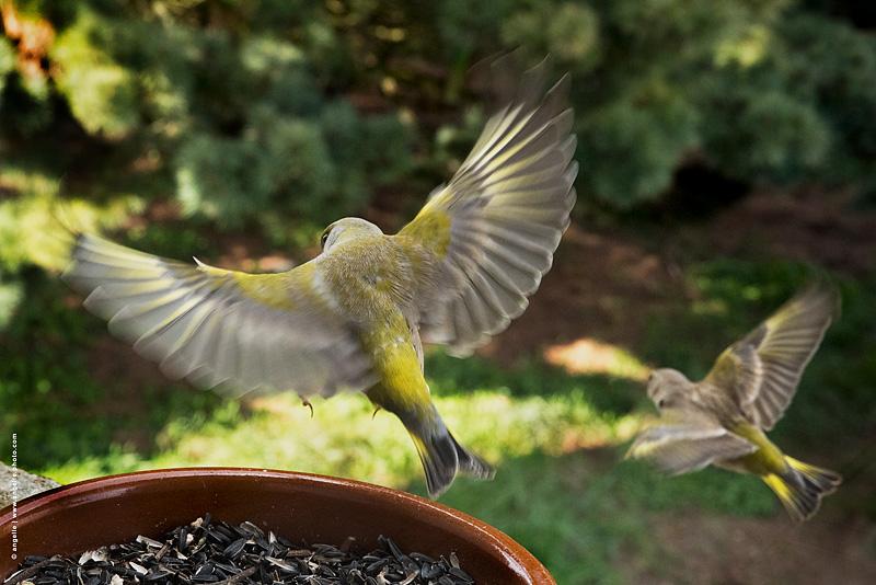 photo © angelle verdier fleur nourir vol beaute mouvement nature