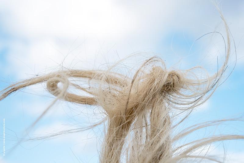 photo © angelle ecrin cheval noeud mouvement reve mysterieux