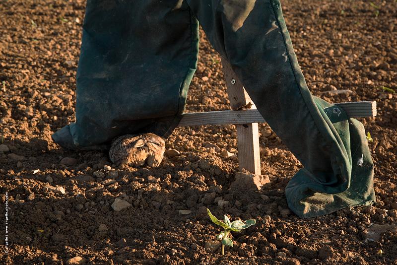 photo ©angelle croix lapereau epouventail terre recolte soleil douceur protection