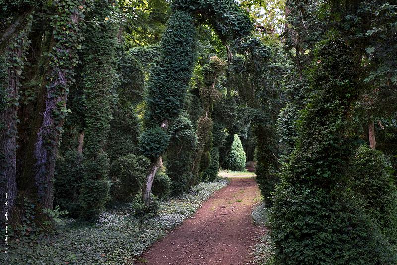 photo ©angelle buis allée parc vieux promenade arbres tricentenaire